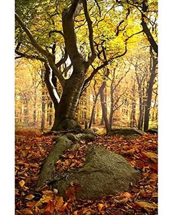 Beech Forest Jigsaw Puzzles Creative Adult Children's Educational Entertainment Toys 500 1000 1500 2000 3000 4000 5000 6000 Pieces 0224 Color : Partition Size : 3000 Pieces